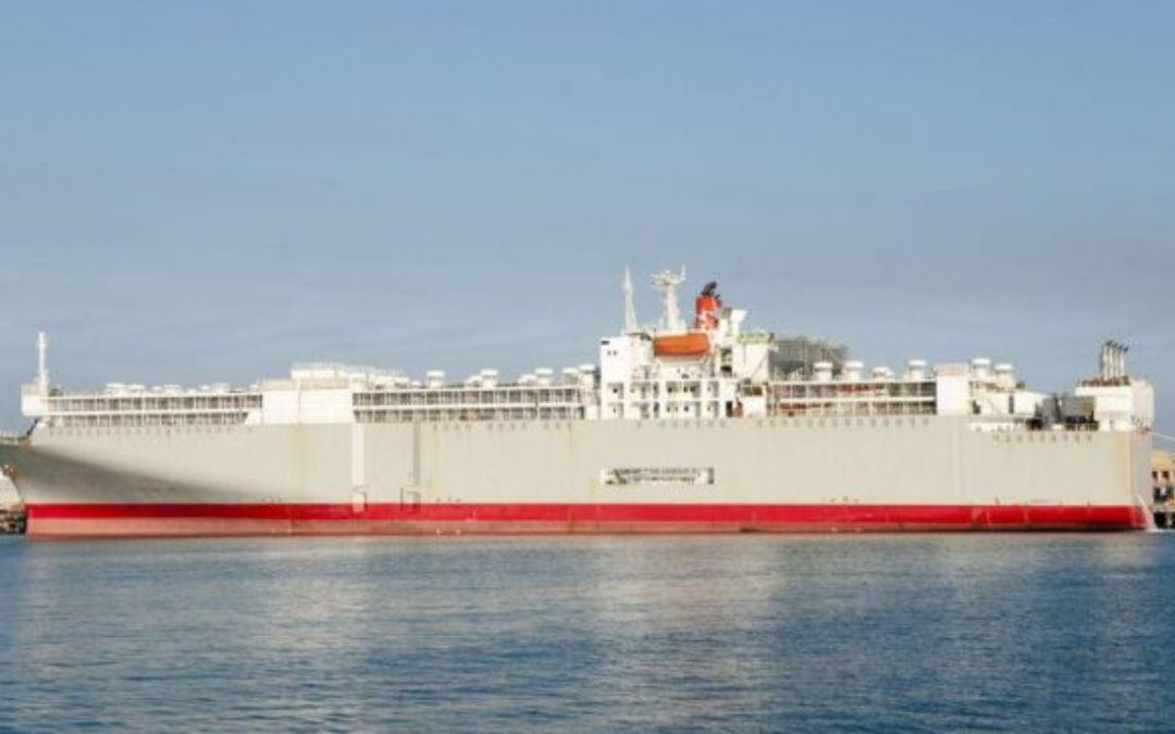 Livestock Vessel With 43 Crew, 5800 Cattle Goes Missing Off SW Japan