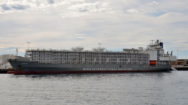 $50000 Raised To Resume Search For Missing Livestock Carrier MV Gulf Livestock1