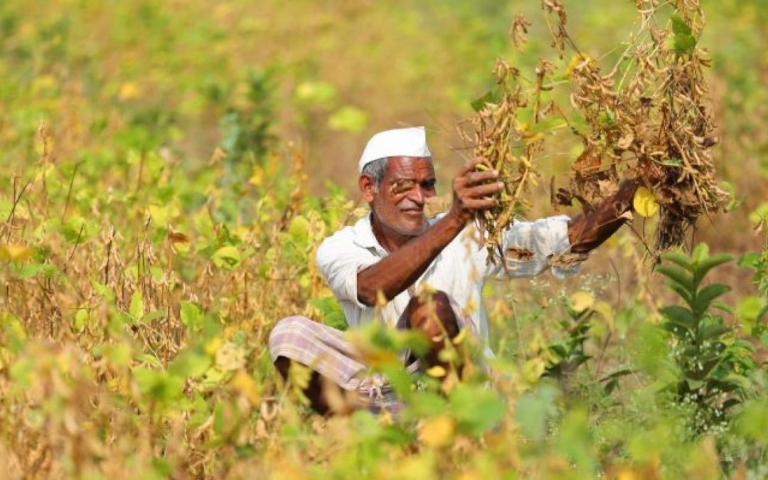 Fleet Management Plants 10,000 Saplings In India To Fight Climate Change